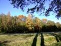 herfstfoto-polderse-bossen